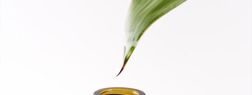 tea-tree-oil-head-lice